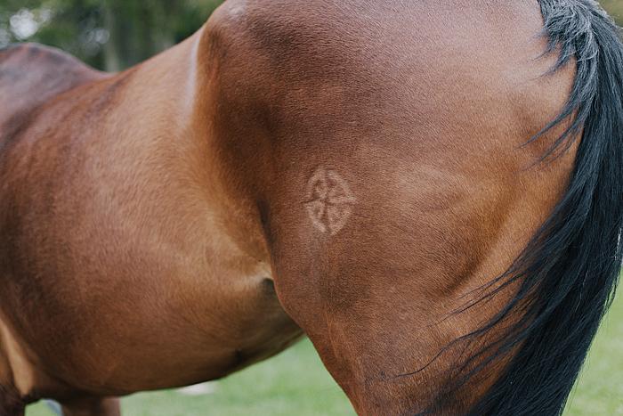 horse-stables-fonthill-047.jpg