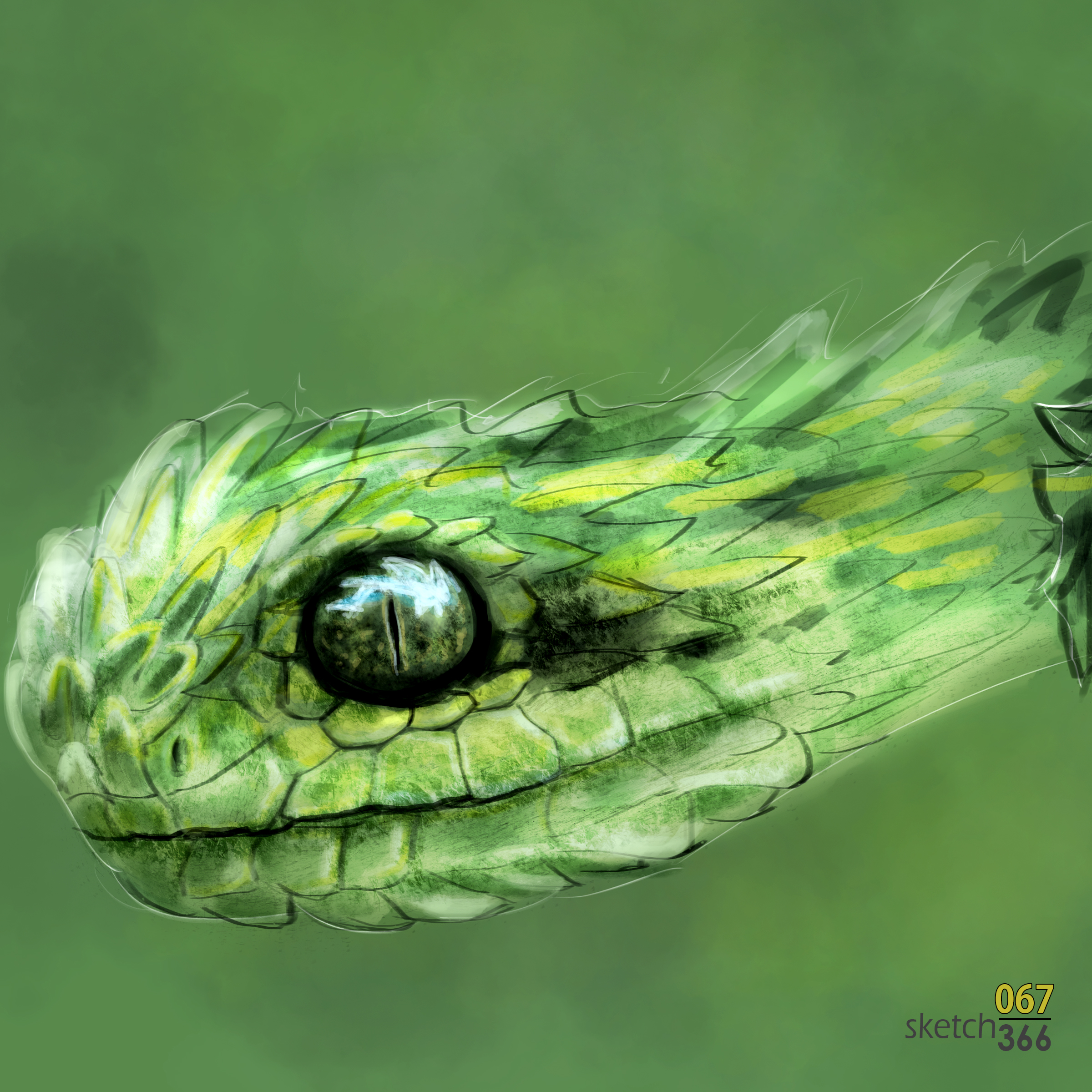 bush viper snake - digital paint