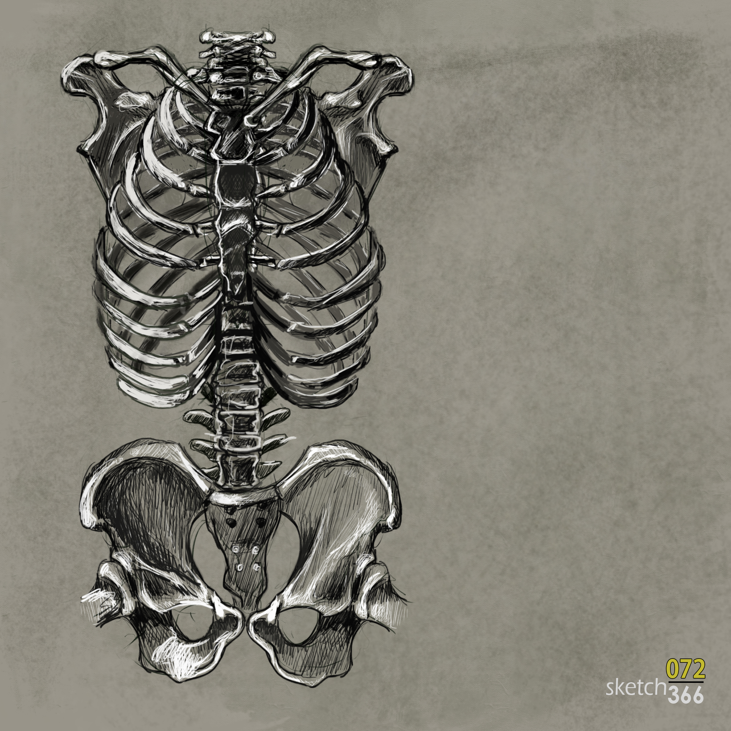 skeleton - digital pencil