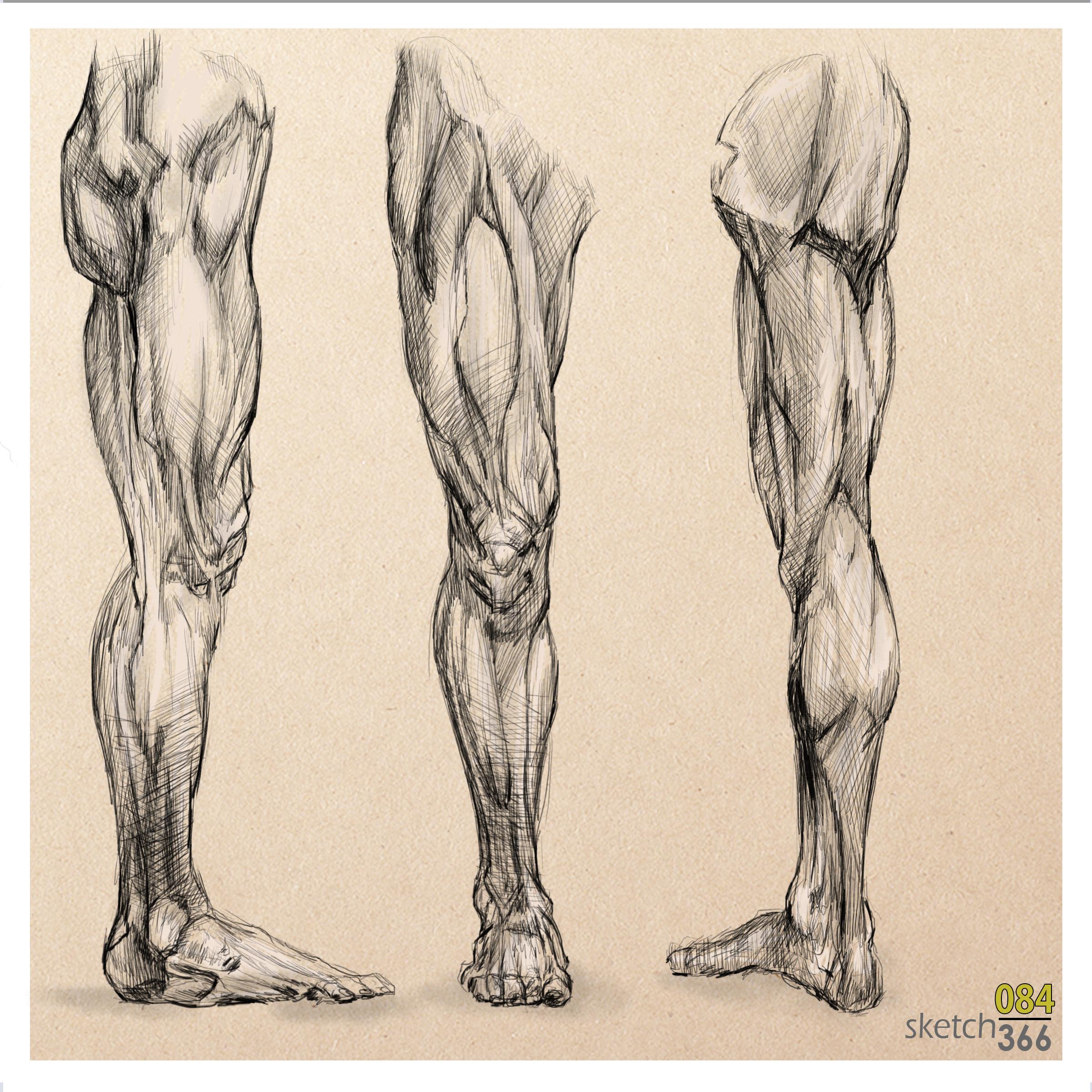 leg study - digital pen and ink