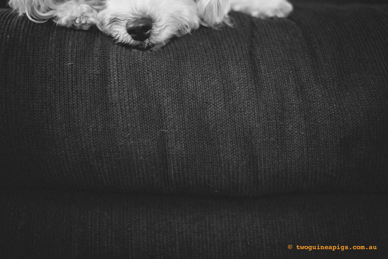 twoguineapigs_mozart-squarespace-11.jpg