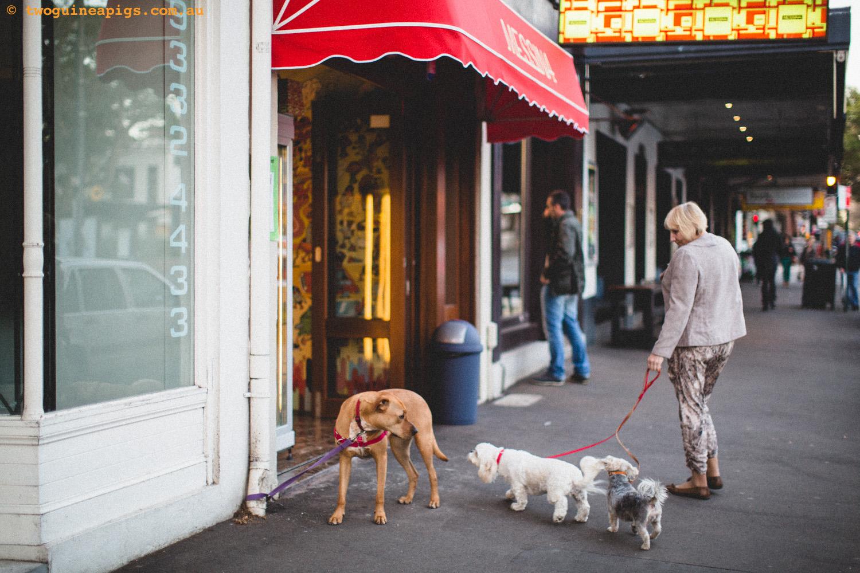 twoguineapigs_street-dog-2.jpg