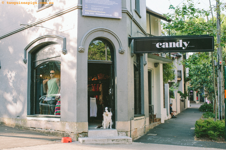 twoguineapigs_street-dog-3.jpg
