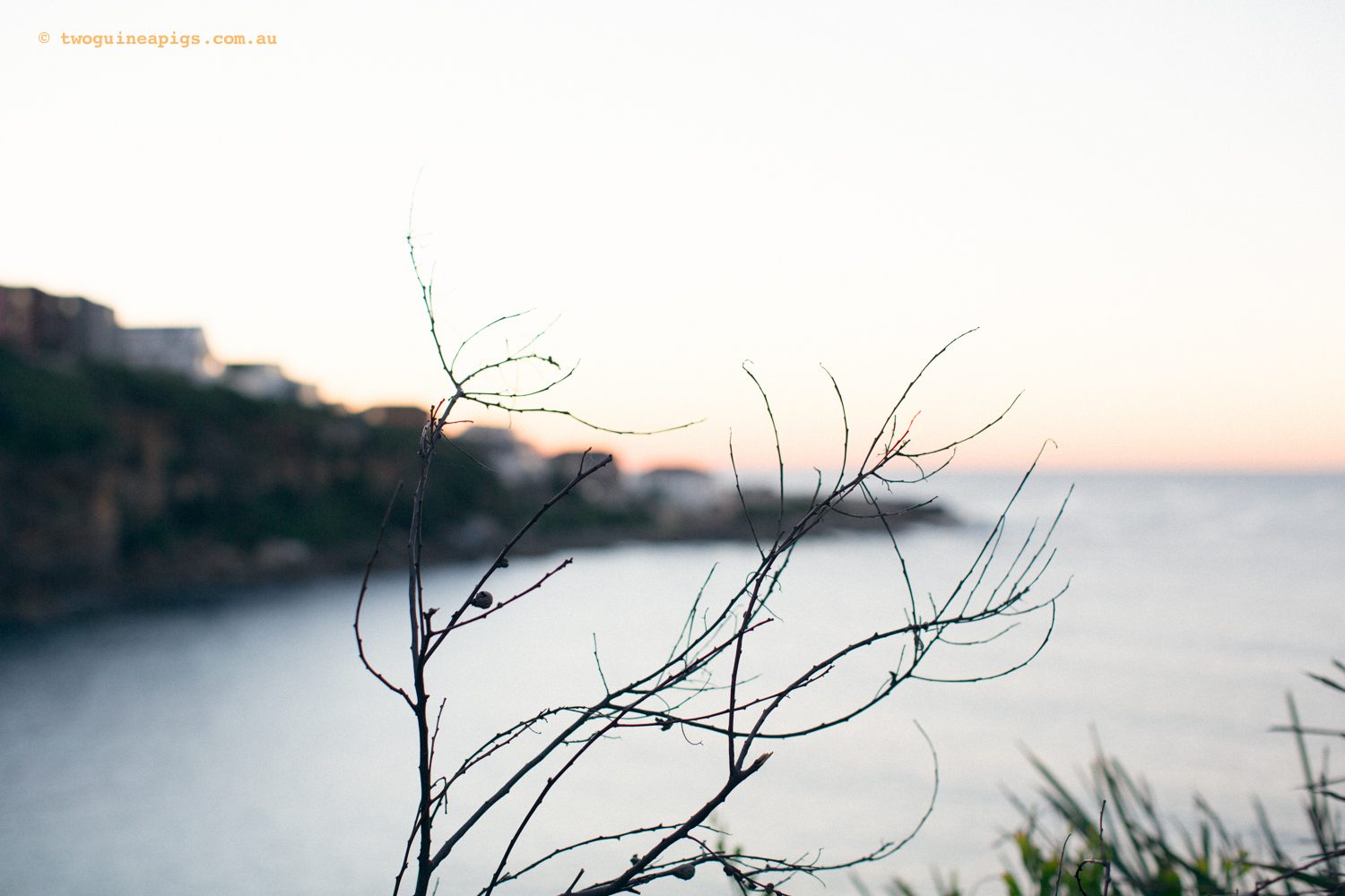 twoguineapigs_pet_photography_autumn-in-sydney_landscapes-8.jpg