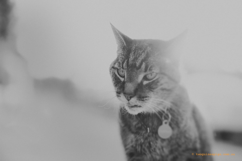 twoguineapigs_paddo_street-cat_bw_1500.jpg