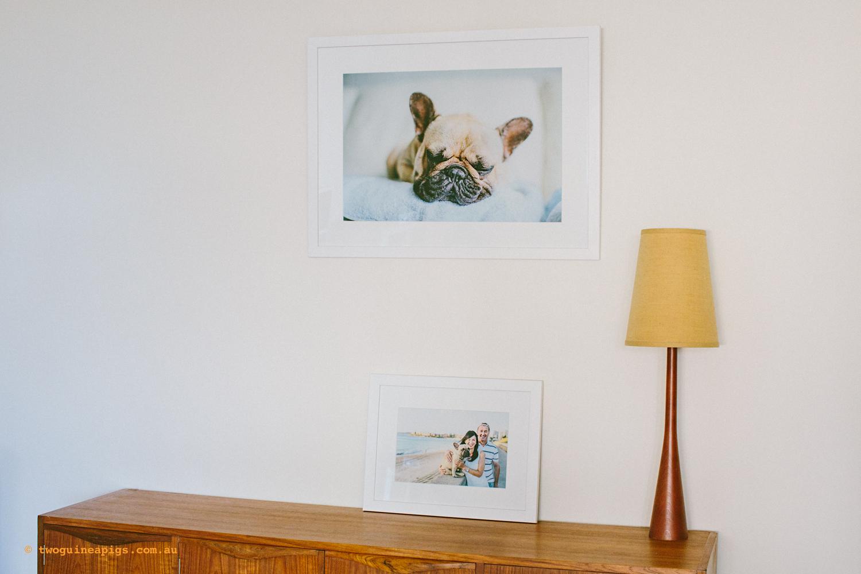 twoguineapigs_pom_french_bulldog_framed_sydney_pet_photographer_1500-3.jpg