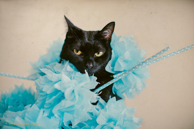 twoguineapigs_fair_day_mardi_gras_black_cat_drag_queen_series_900-2.jpg