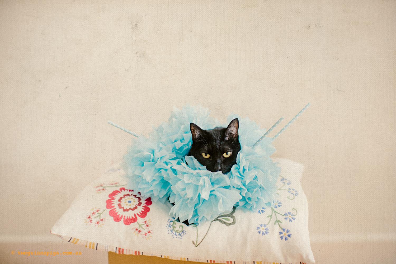 twoguineapigs_fair_day_mardi_gras_black_cat_drag_queen_series_900-3.jpg