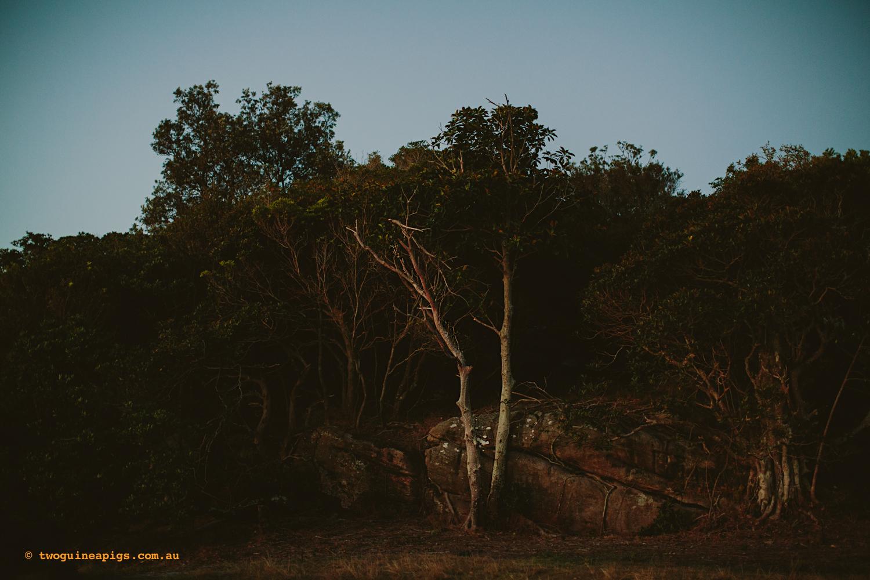 twoguineapigs_sydney_pet_photographer_twilight_nielsen_park_1500-13.jpg