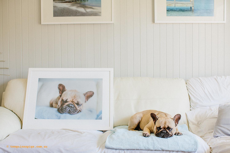 twoguineapigs_pom_pom_french_bulldog_framed_artwork_1500.jpg