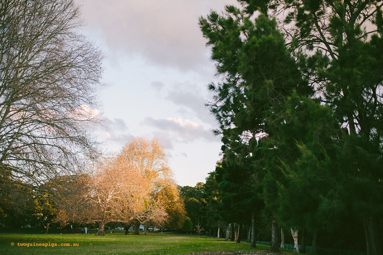 twoguineapigs_rushcutters_bay_winter_sunset_landscapes_1500-6.jpg