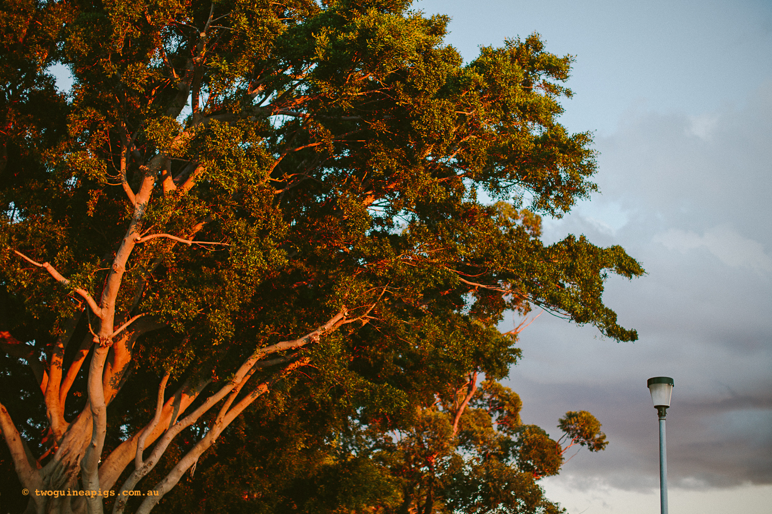 twoguineapigs_rushcutters_bay_winter_sunset_landscapes_1500-17.jpg