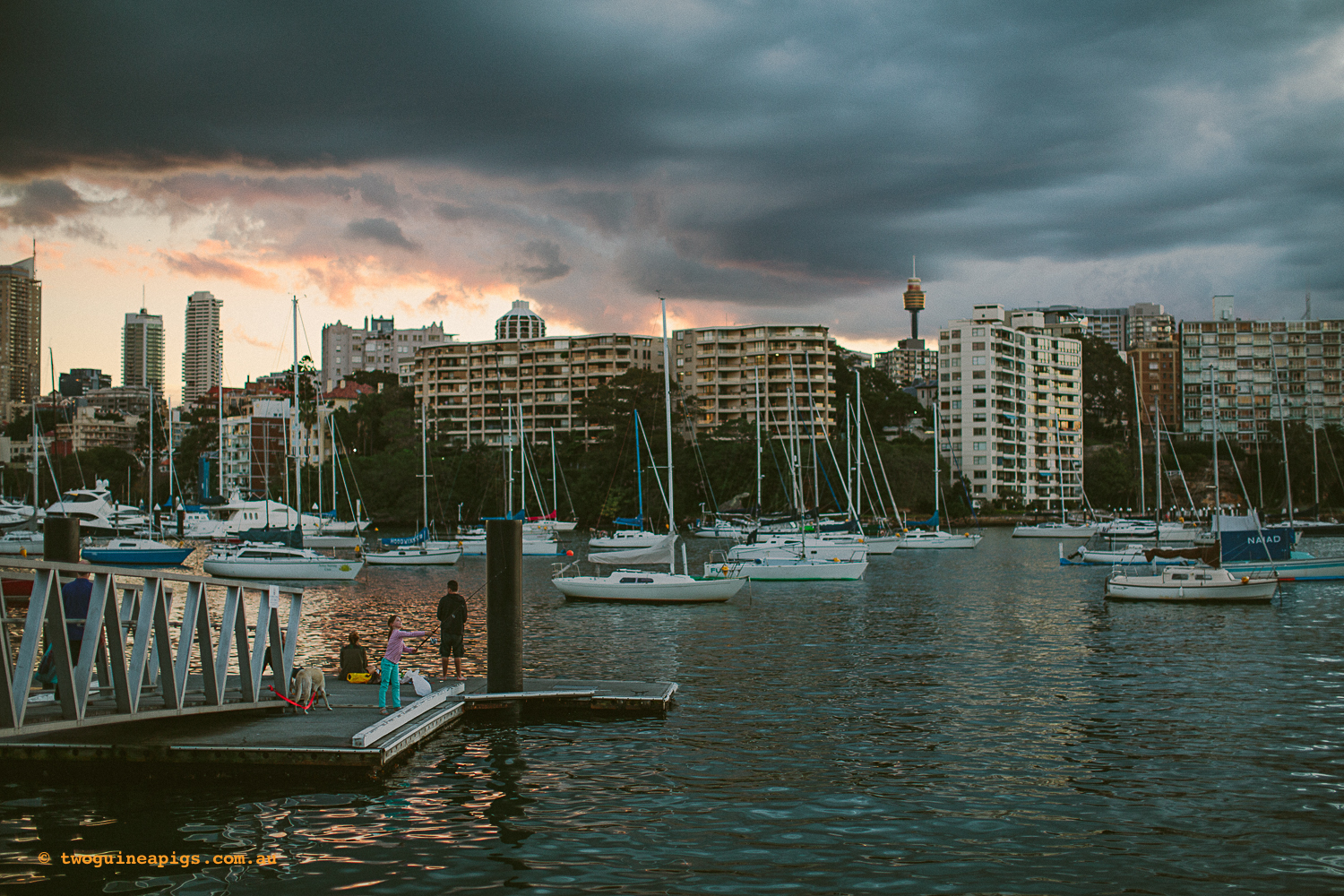twoguineapigs_rushcutters_bay_winter_sunset_landscapes_1500-18.jpg