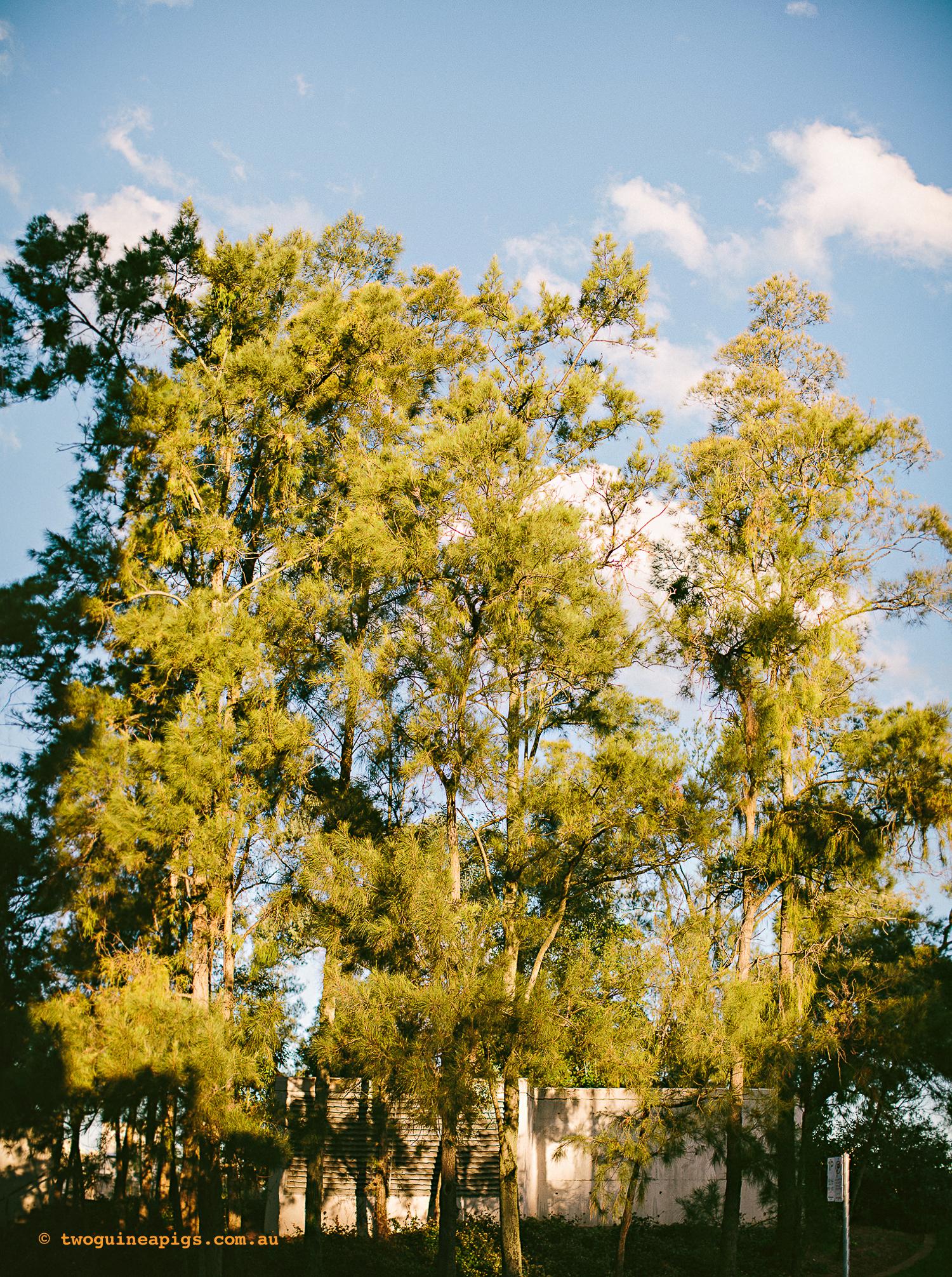twoguineapigs_pet_photography_potts_point_landscape_stitched