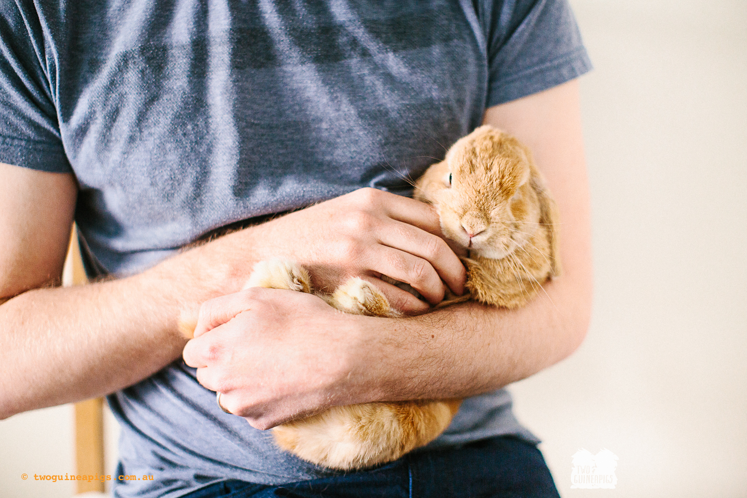 twoguineapigs_pet_photography_waffles_lop_eared_bunny_1500-2.jpg