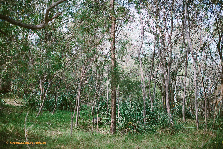 twoguineapigs_pet_photography_badangi_reserve_wollstonecraft_location_scout_1500-1.jpg