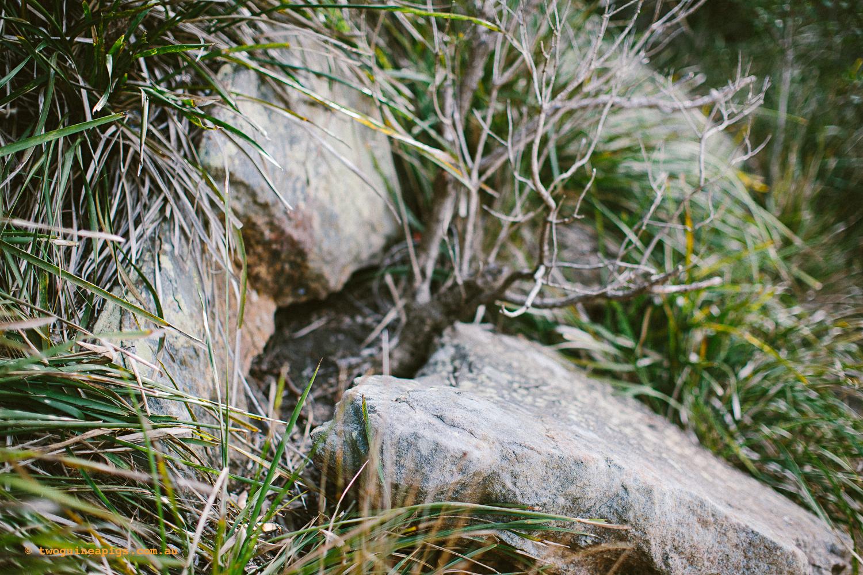 twoguineapigs_pet_photography_badangi_reserve_wollstonecraft_location_scout_1500-16.jpg