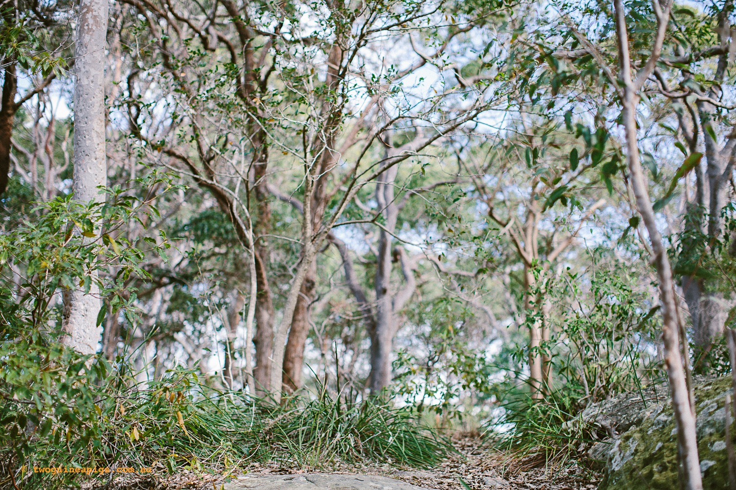 twoguineapigs_pet_photography_berry_island_reserve_wollstonecraft_location_scout_1500-7.jpg
