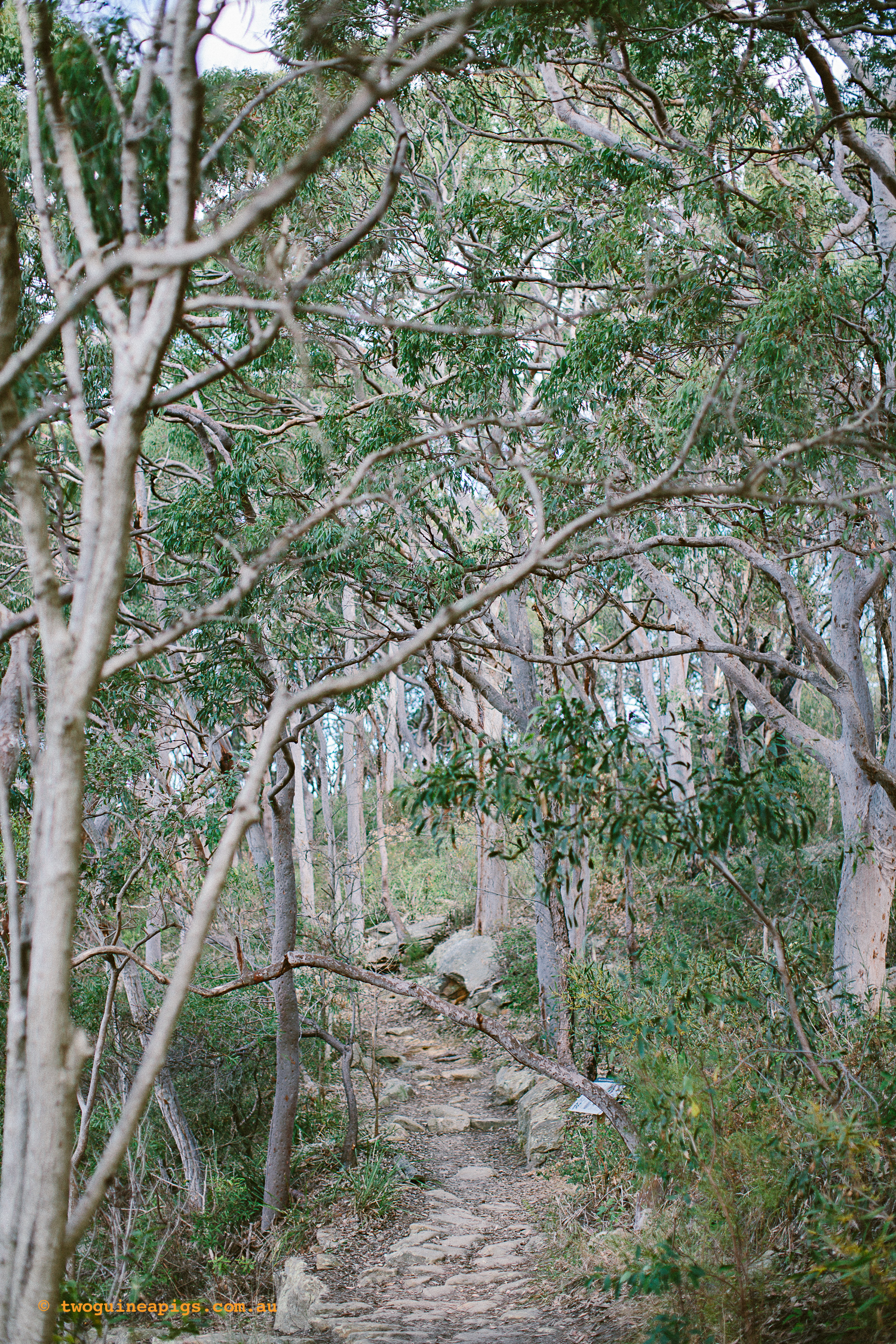 twoguineapigs_pet_photography_berry_island_reserve_wollstonecraft_location_scout_1500-11.jpg