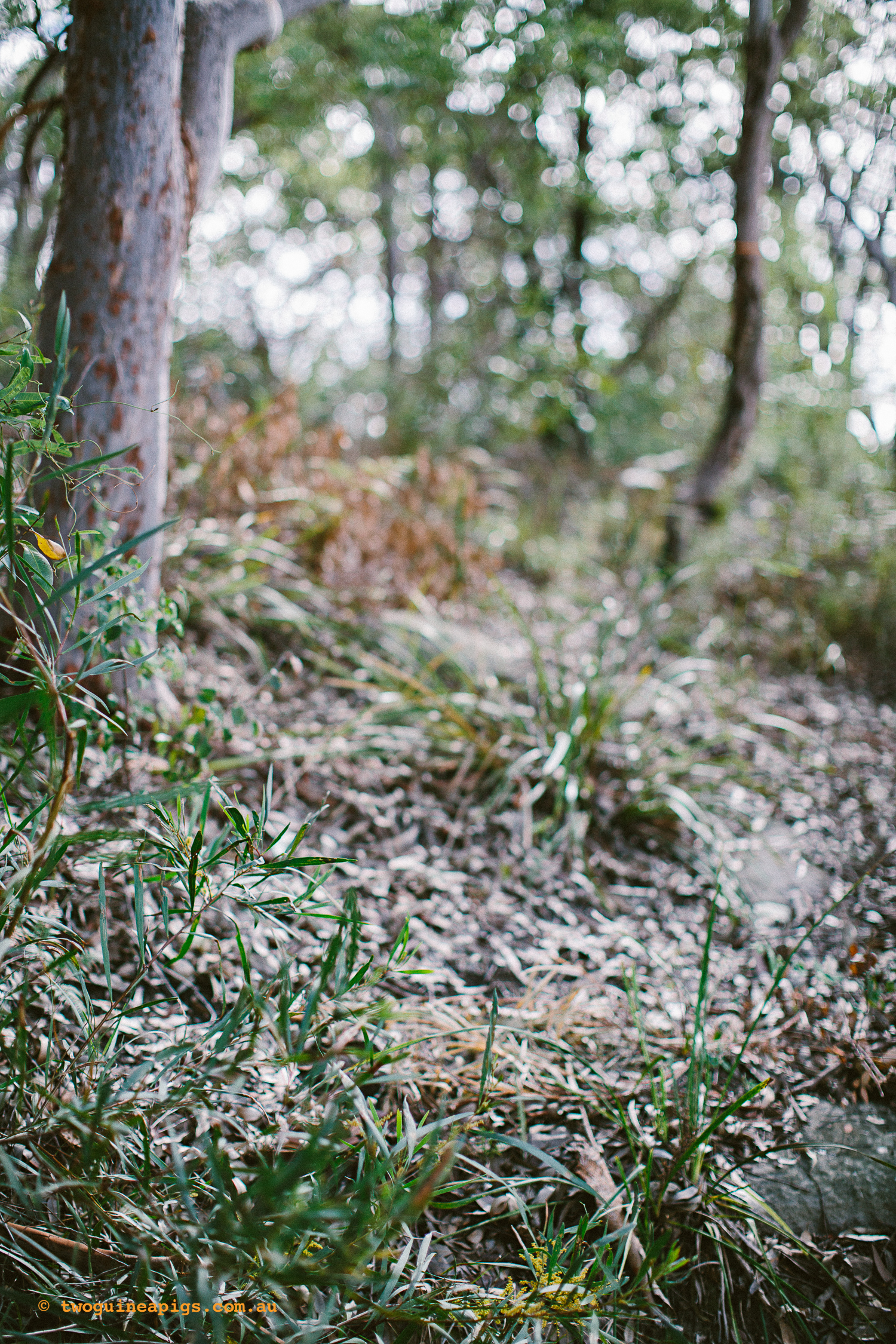 twoguineapigs_pet_photography_berry_island_reserve_wollstonecraft_location_scout_1500-15.jpg