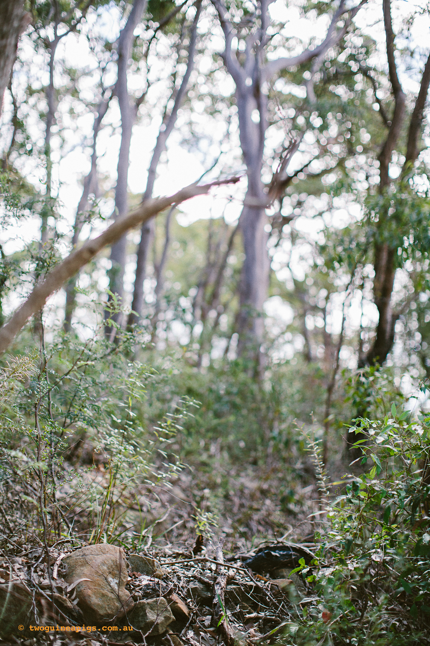 twoguineapigs_pet_photography_berry_island_reserve_wollstonecraft_location_scout_1500-20.jpg