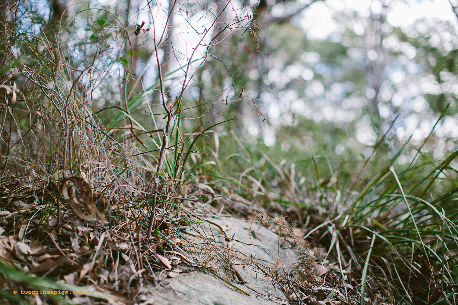 twoguineapigs_pet_photography_berry_island_reserve_wollstonecraft_location_scout_1500-26.jpg