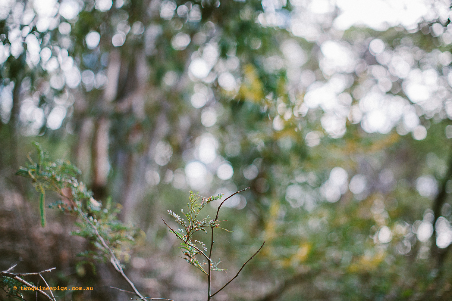 twoguineapigs_pet_photography_berry_island_reserve_wollstonecraft_location_scout_1500-30.jpg