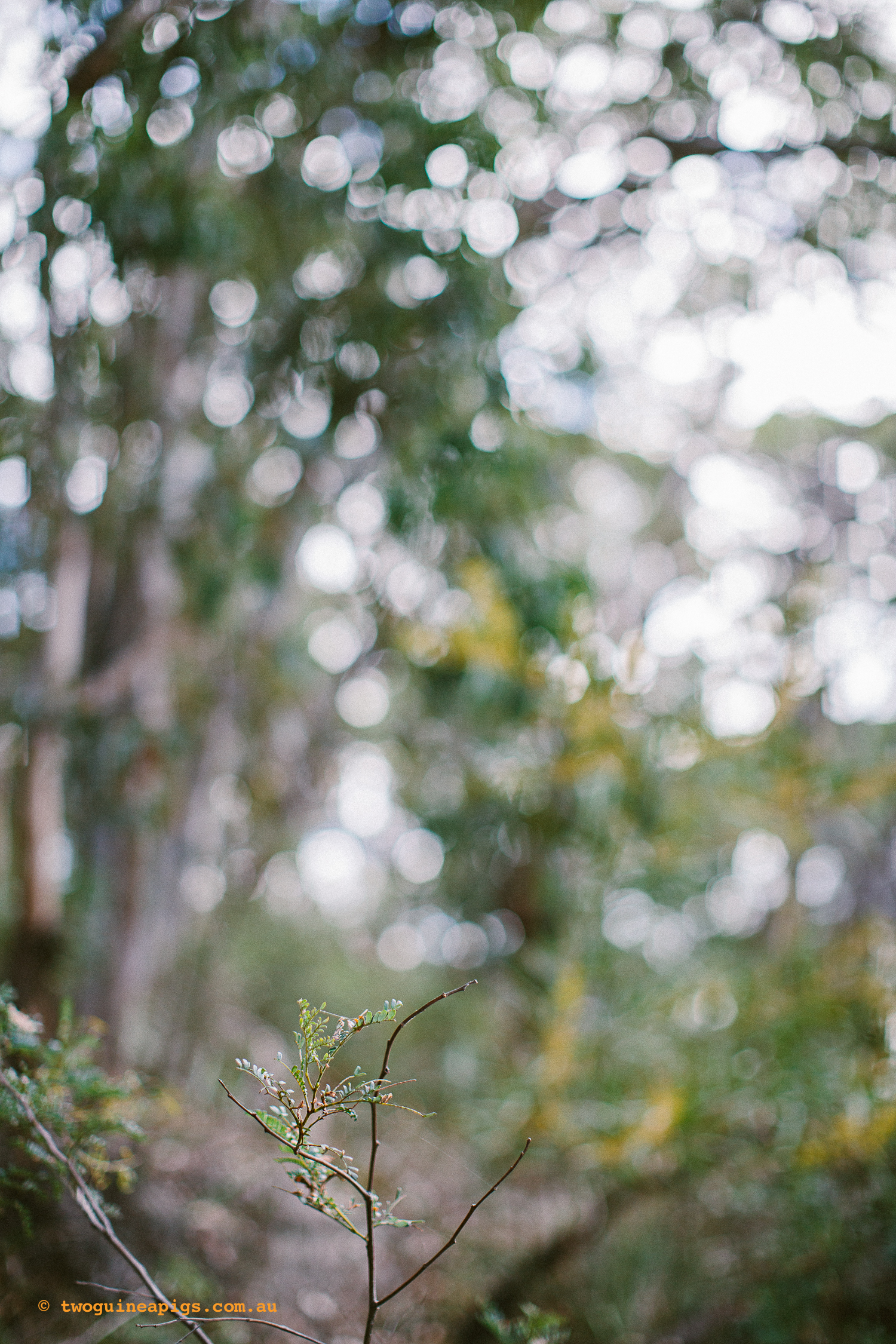 twoguineapigs_pet_photography_berry_island_reserve_wollstonecraft_location_scout_1500-29.jpg