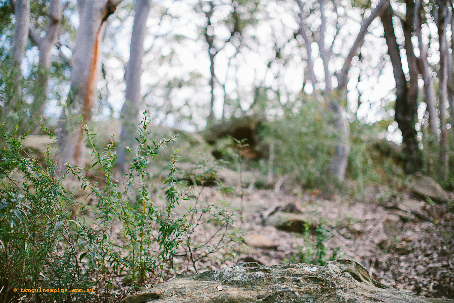 twoguineapigs_pet_photography_berry_island_reserve_wollstonecraft_location_scout_1500-34.jpg