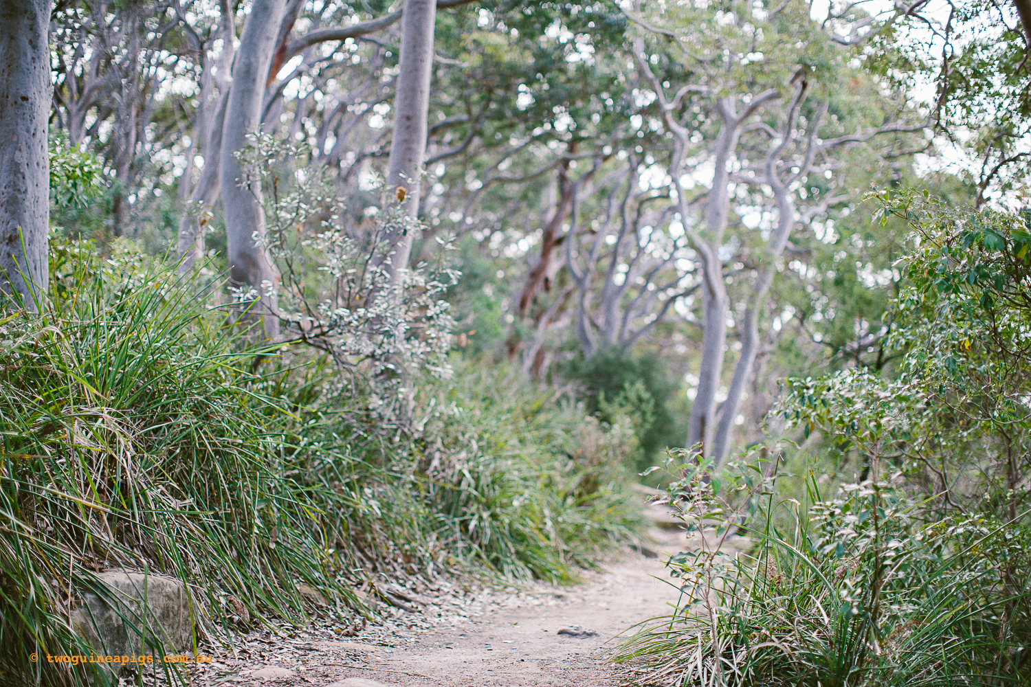 twoguineapigs_pet_photography_berry_island_reserve_wollstonecraft_location_scout_1500-35.jpg