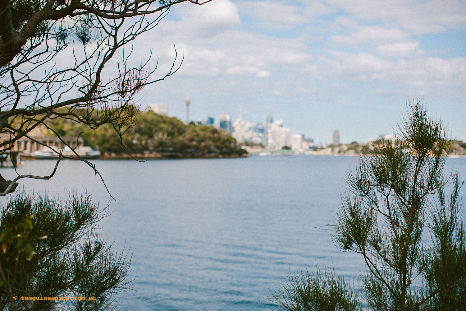 twoguineapigs_pet_photography_berry_island_reserve_wollstonecraft_location_scout_1500-38.jpg
