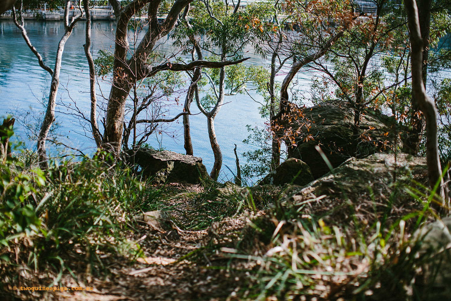 twoguineapigs_pet_photography_berry_island_reserve_wollstonecraft_location_scout_1500-54.jpg