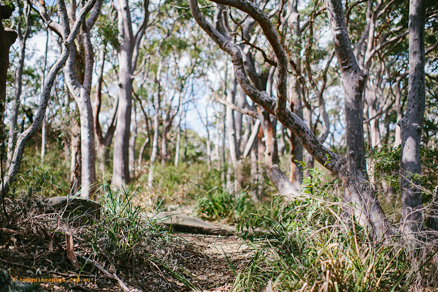 twoguineapigs_pet_photography_berry_island_reserve_wollstonecraft_location_scout_1500-56.jpg