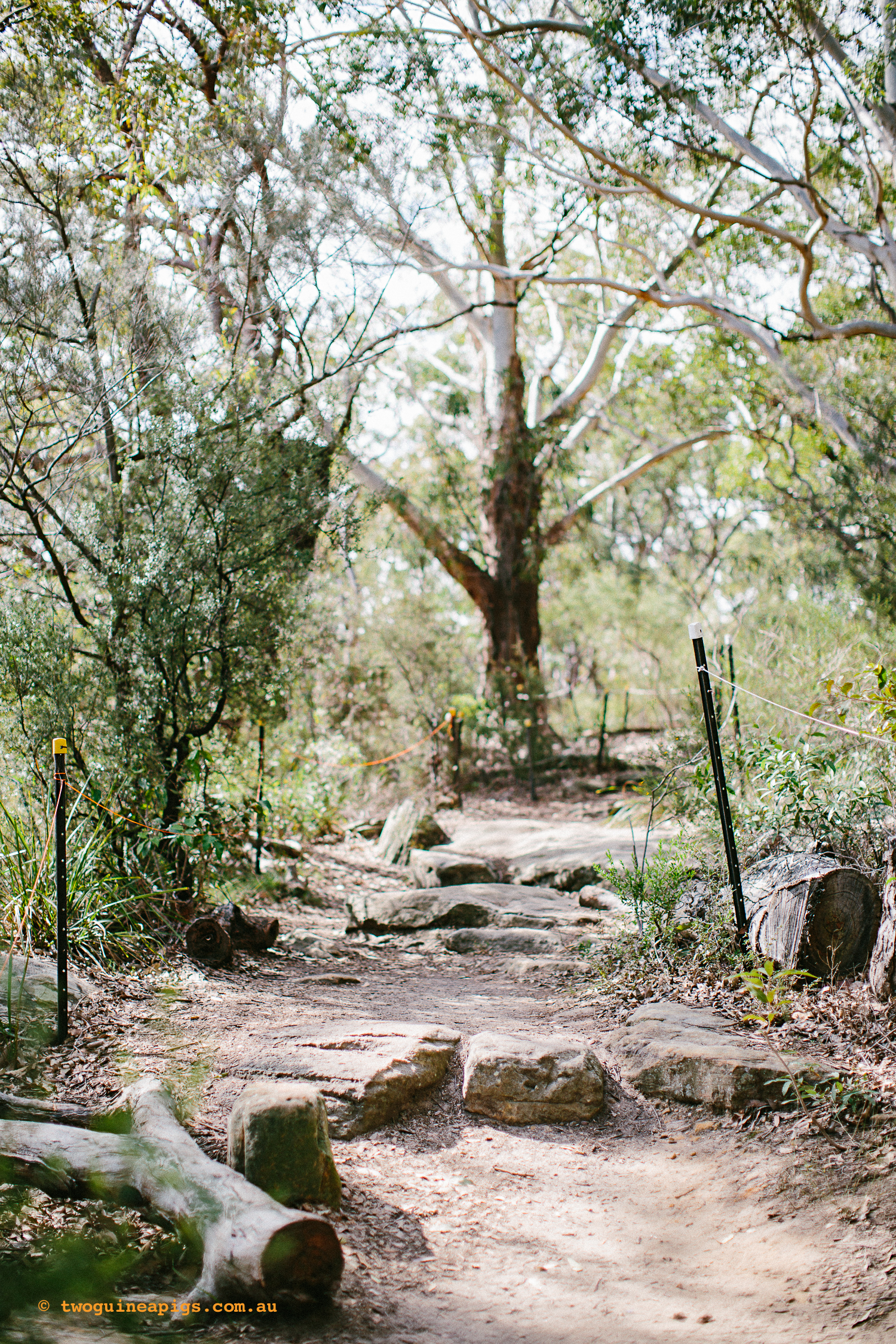 twoguineapigs_pet_photography_berry_island_reserve_wollstonecraft_location_scout_1500-60.jpg
