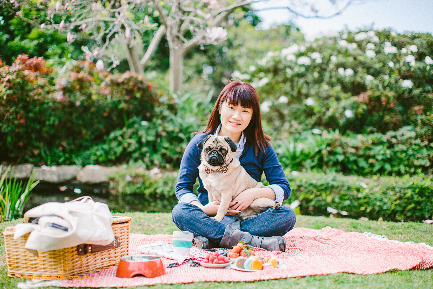 twoguineapigs_pet_photography_oh_jaffa_picnic_pugs_rodger_1500-18.jpg