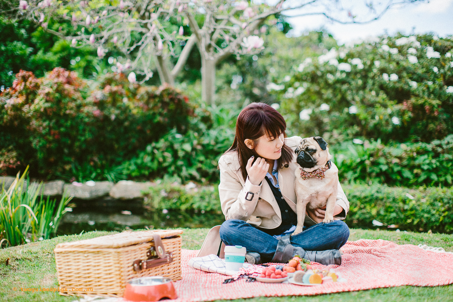 twoguineapigs_pet_photography_oh_jaffa_picnic_pugs_rodger_1500-15.jpg