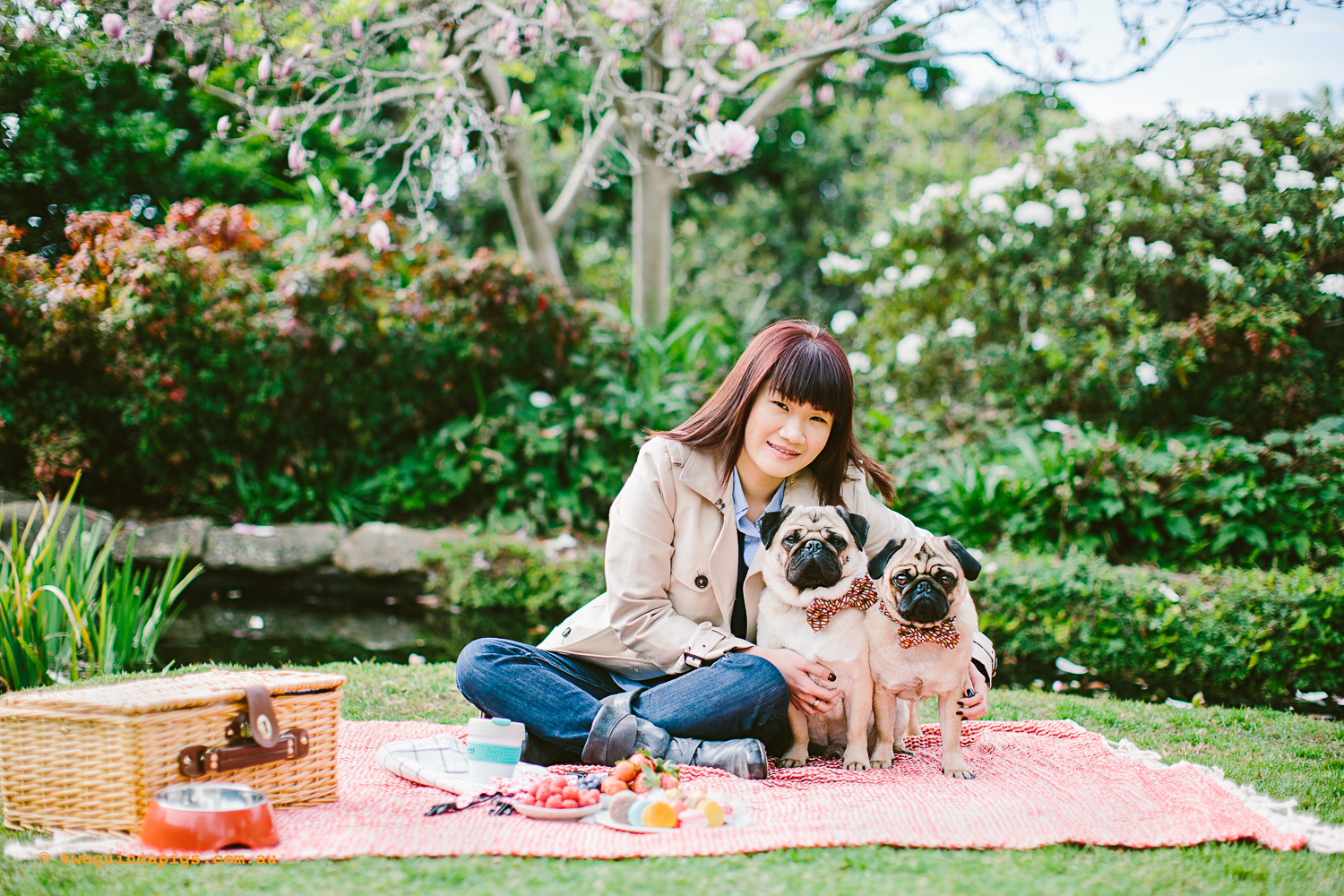 twoguineapigs_pet_photography_oh_jaffa_picnic_pugs_rodger_1500-10.jpg