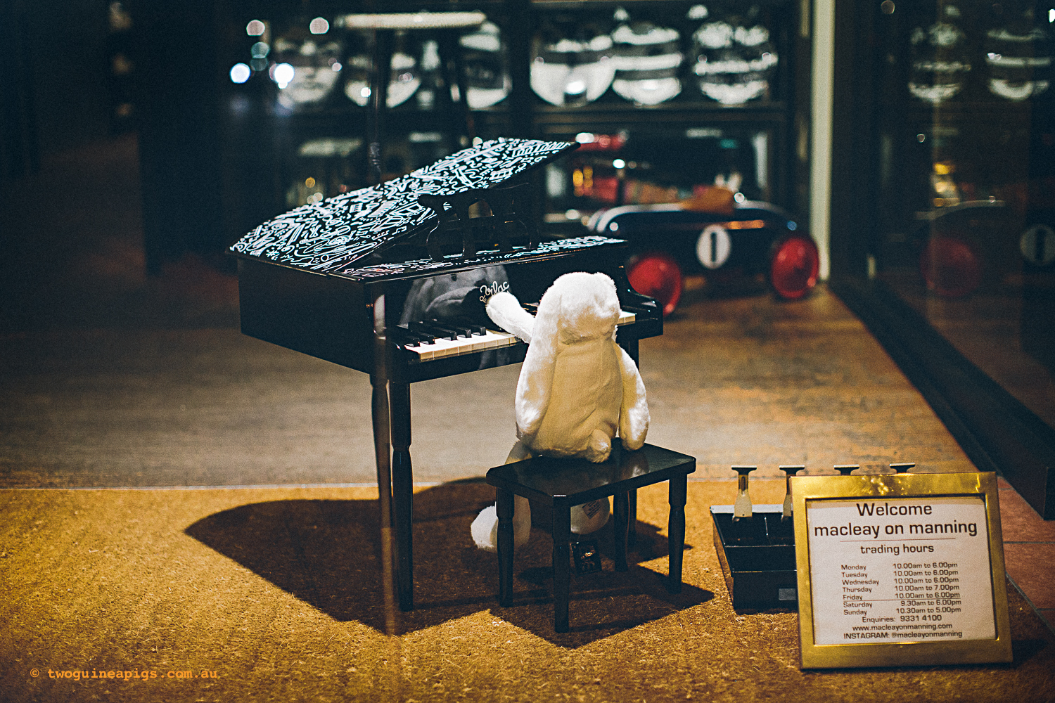 twoguineapigs_pet_photography_macleay_on_mannings_bunny_piano_performance