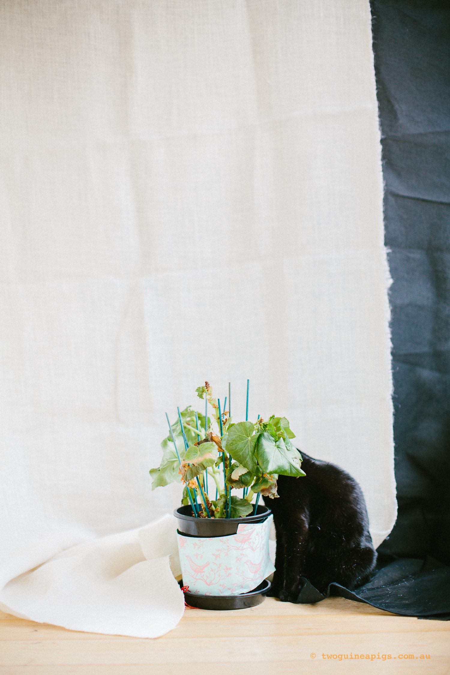 twoguineapigs_pet_photography_ruby_slipper_cat_floral_series_TEST_1500-24.jpg