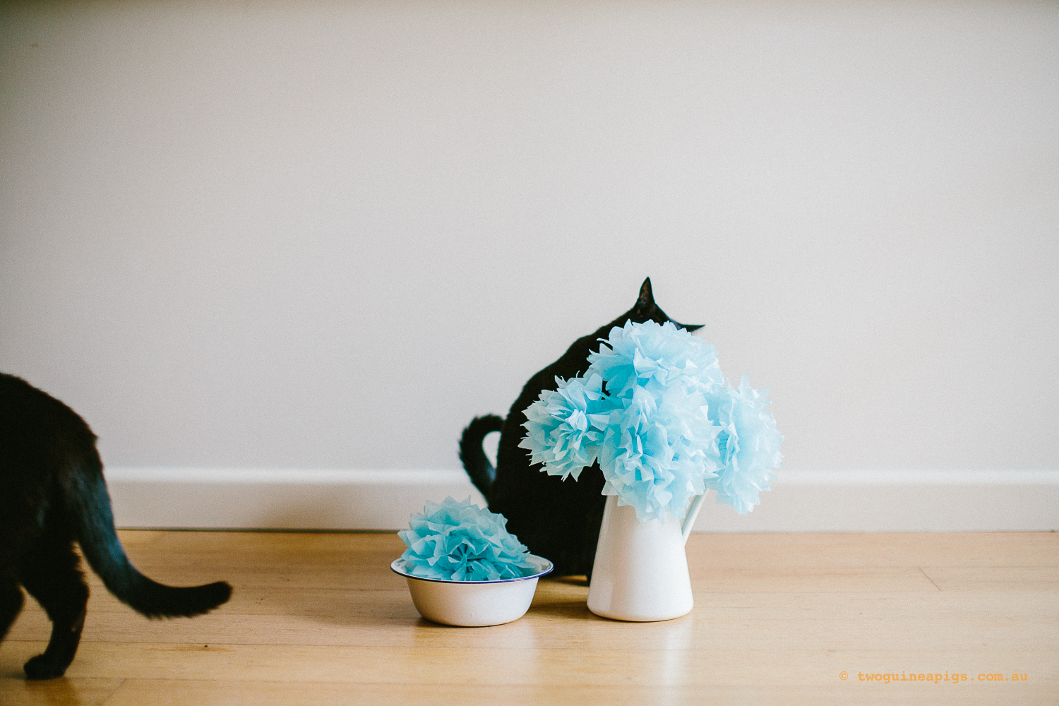 twoguineapigs_pet_photography_ruby_slipper_cat_floral_series_TEST_1500-30.jpg