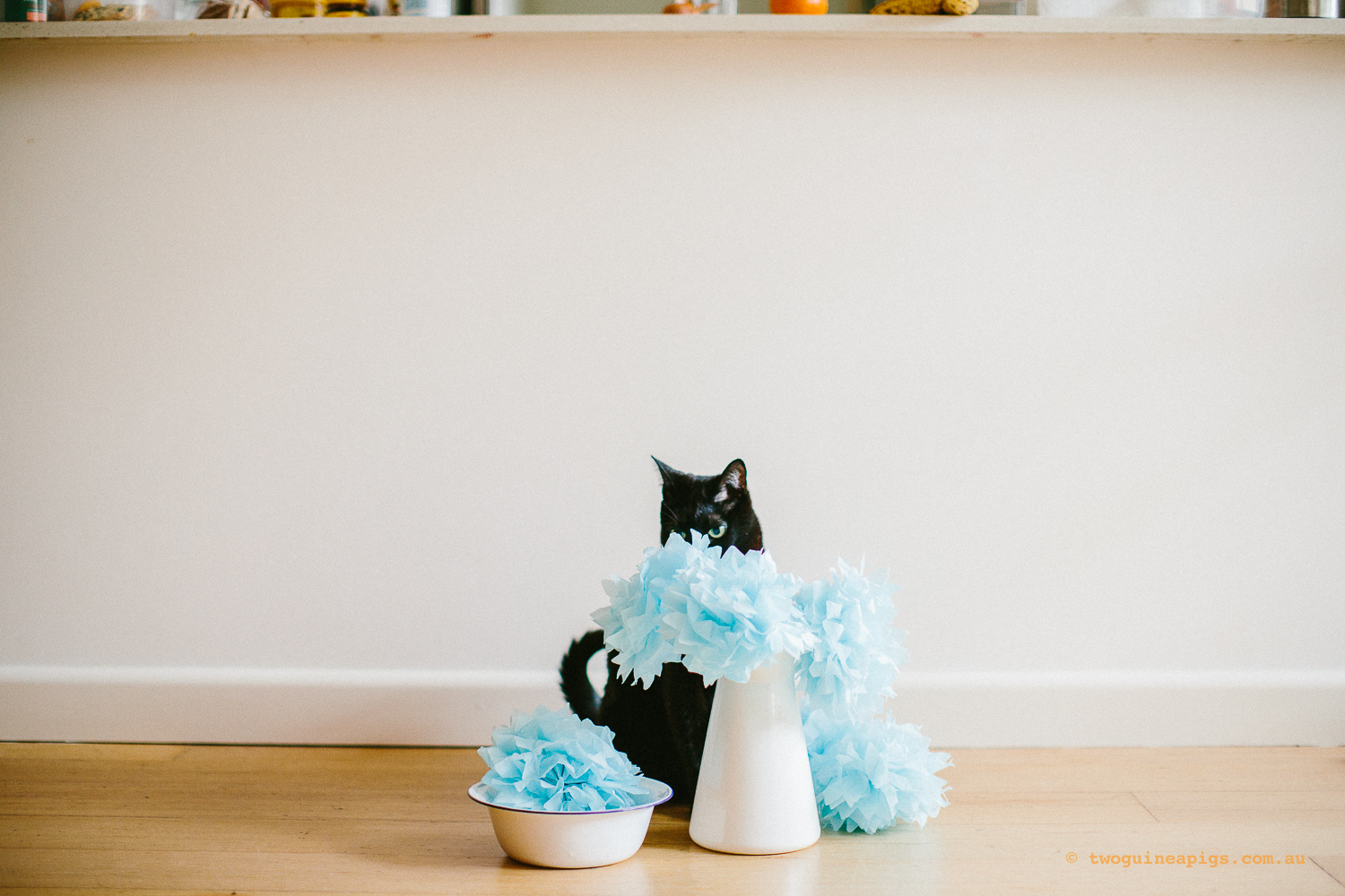 twoguineapigs_pet_photography_ruby_slipper_cat_floral_series_TEST_1500-31.jpg
