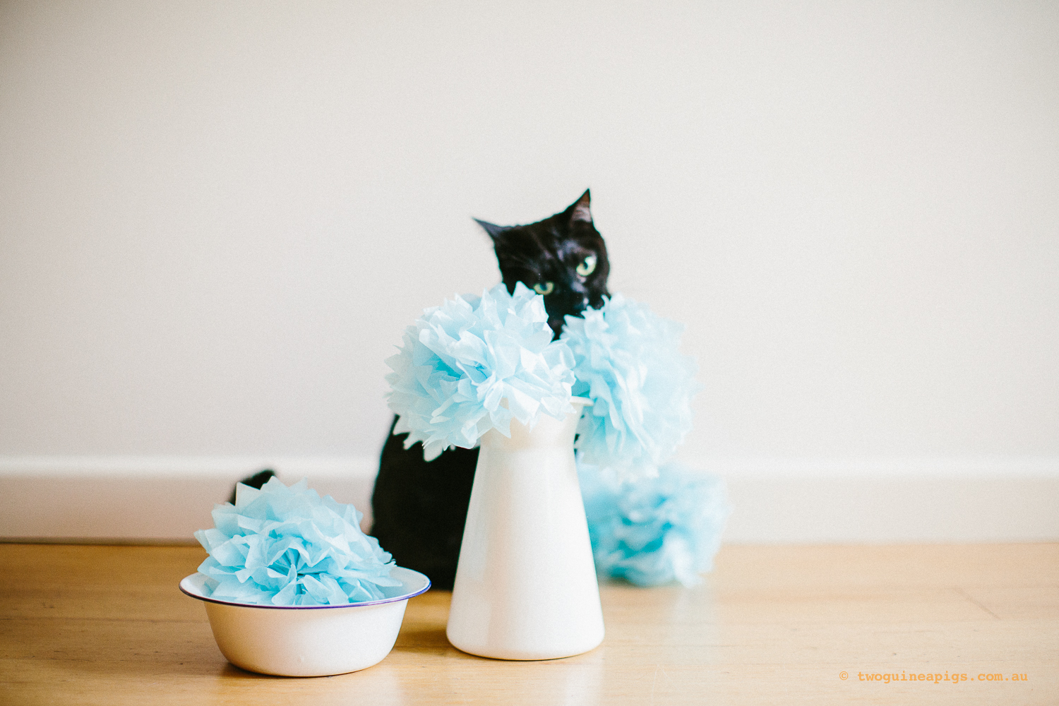 twoguineapigs_pet_photography_ruby_slipper_cat_floral_series_TEST_1500-33.jpg