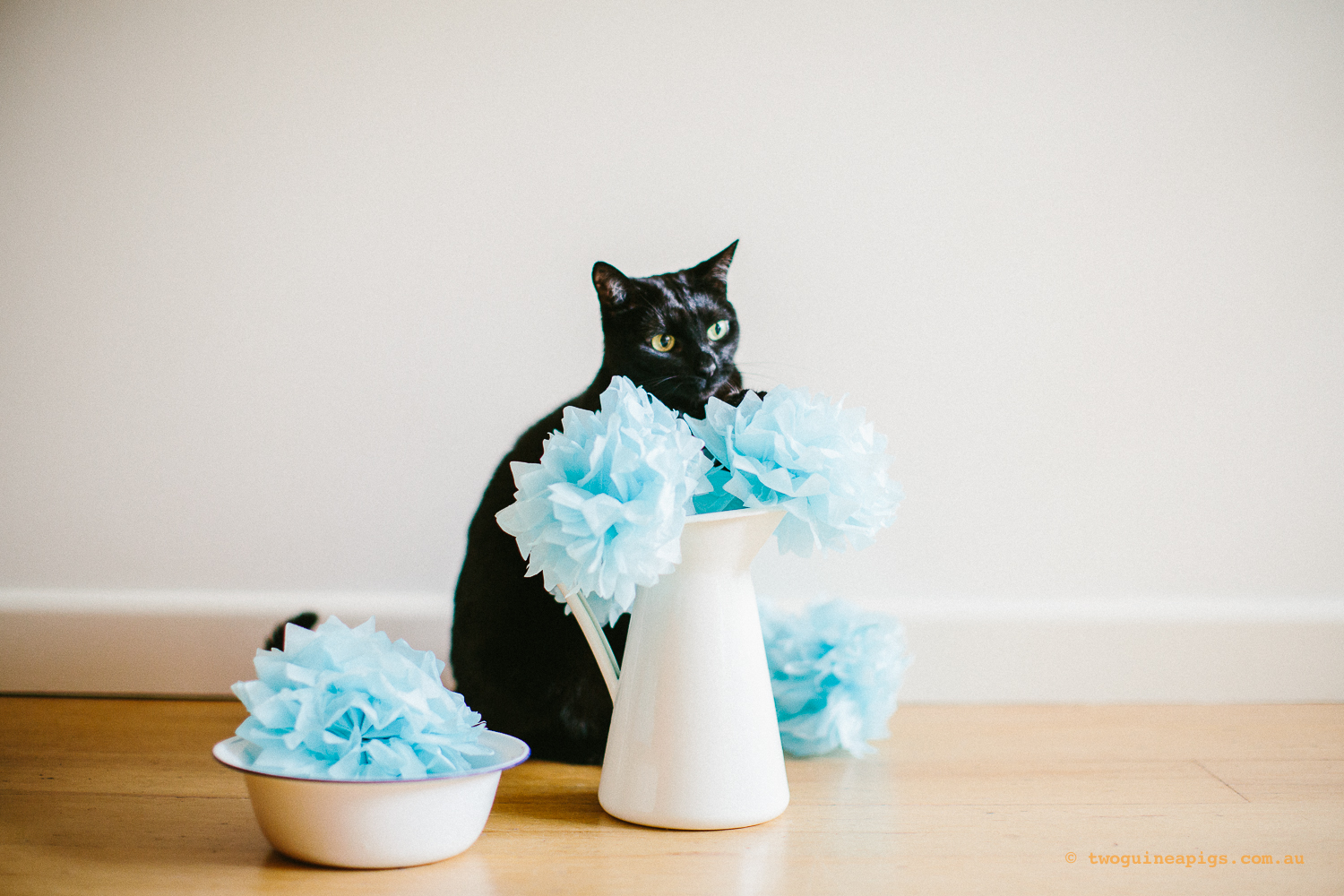 twoguineapigs_pet_photography_ruby_slipper_cat_floral_series_TEST_1500-34.jpg
