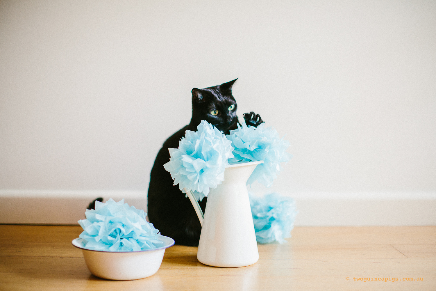 twoguineapigs_pet_photography_ruby_slipper_cat_floral_series_TEST_1500-35.jpg