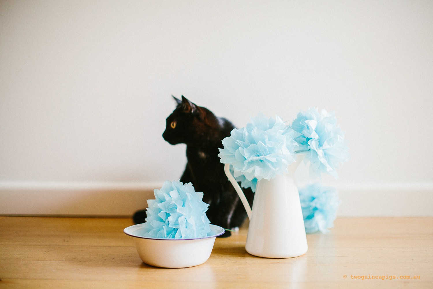 twoguineapigs_pet_photography_ruby_slipper_cat_floral_series_TEST_1500-38.jpg
