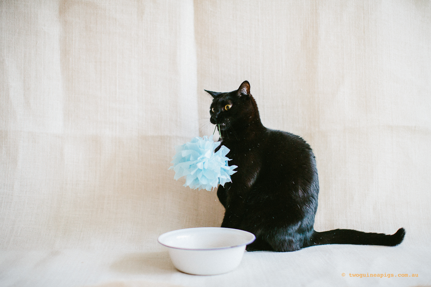 twoguineapigs_pet_photography_ruby_slipper_cat_floral_series_TEST_1500-41.jpg