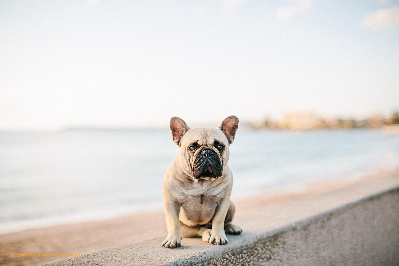 twoguineapigs_pompom_french_bulldog_cronulla_1500-20.jpg