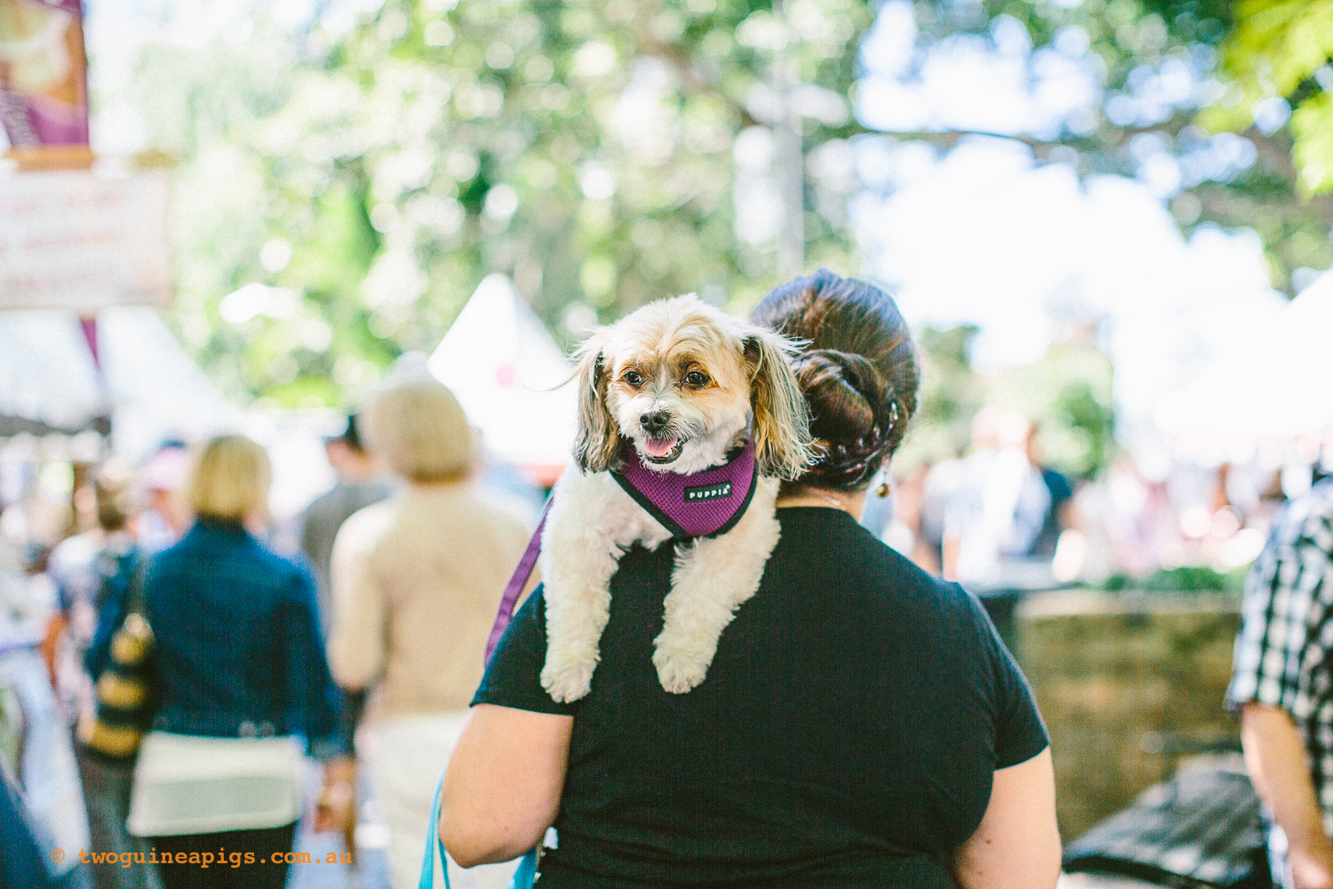 twoguineapigs_pet_photography_kxfestival_ppvh_20141012_1500-1.jpg