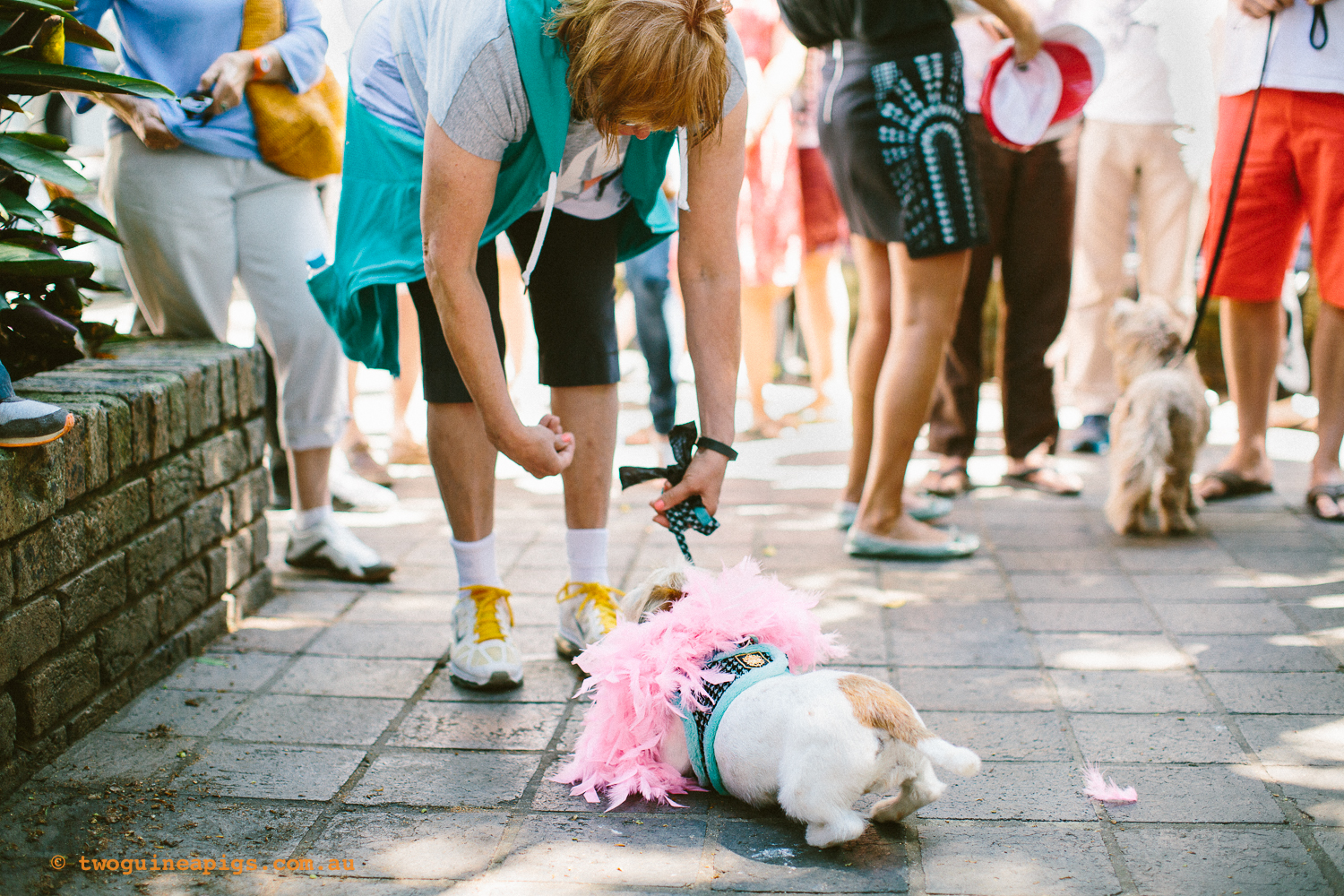 twoguineapigs_pet_photography_kxfestival_ppvh_20141012_1500-14.jpg