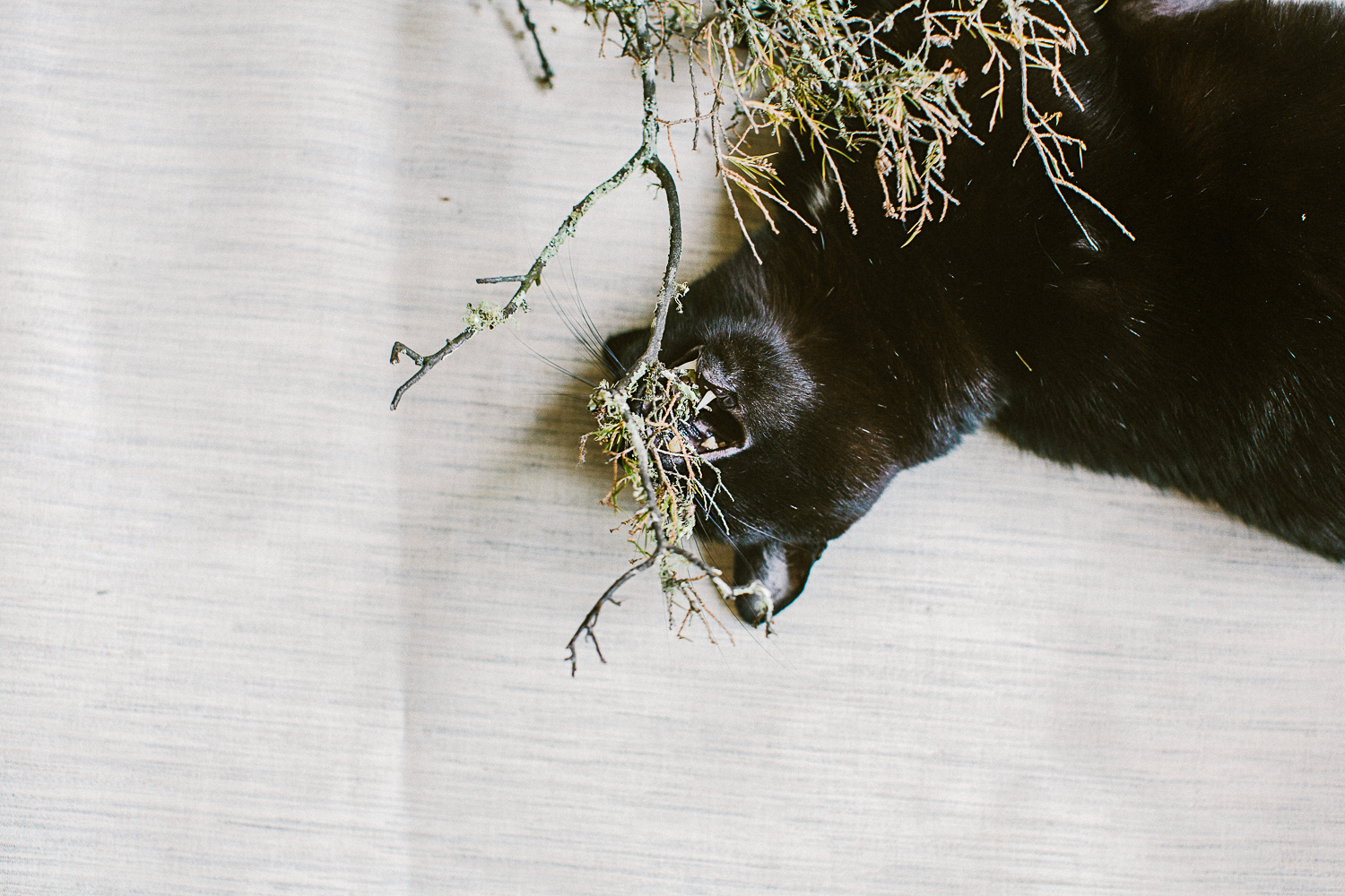 twoguineapigs_photography_ruby_slippers_cat_and_floral_series_1500.jpg